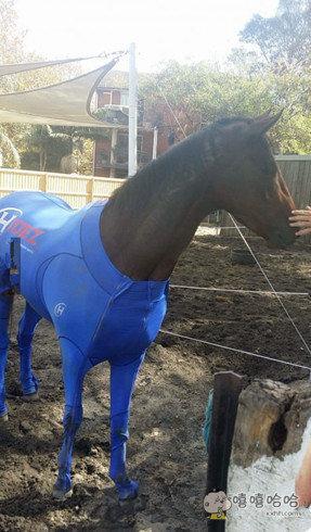 喜欢穿健美裤的马