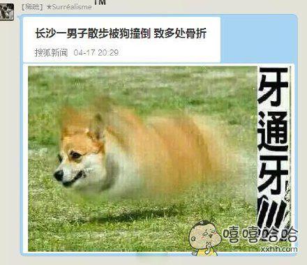 这狗的速度是有多快
