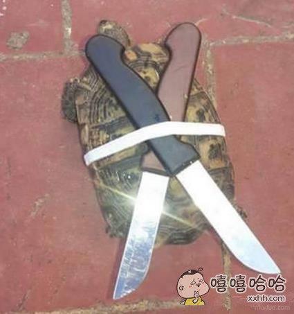 霸气的忍者神龟