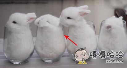 偷偷亲了下自己的心上兔