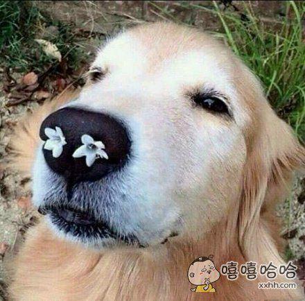 整个鼻孔都是春天的味道,唔~~~
