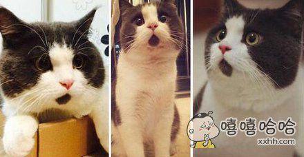 小喵下巴有一块奇怪的黑毛,所以看起来永远是一脸surprise的表情。