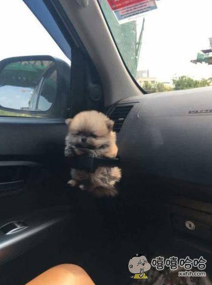 狗狗太小了,没办法系安全带,于是主人给它定制了一个,简直太萌了