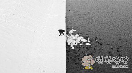 他在雪后的湖边喂食,他完全不知道他在一张美到什么程度的照片里