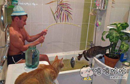 论如何正确洗猫
