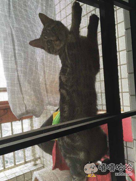 在家看电视时突然往阳台一看……