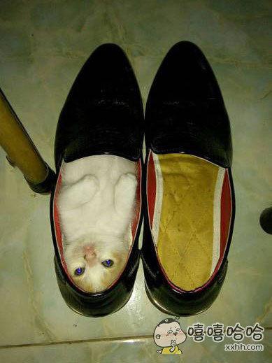 喵星人霸占了我的鞋~