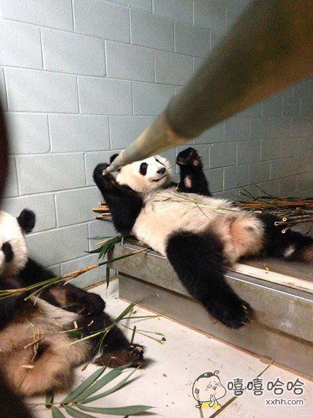 新型竹子自拍杆,照的不好看就吃掉~