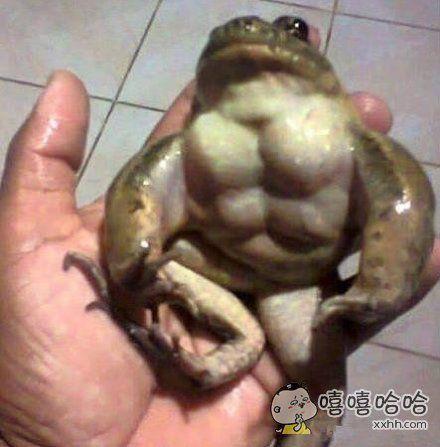 妈蛋!我都比不上这只青蛙