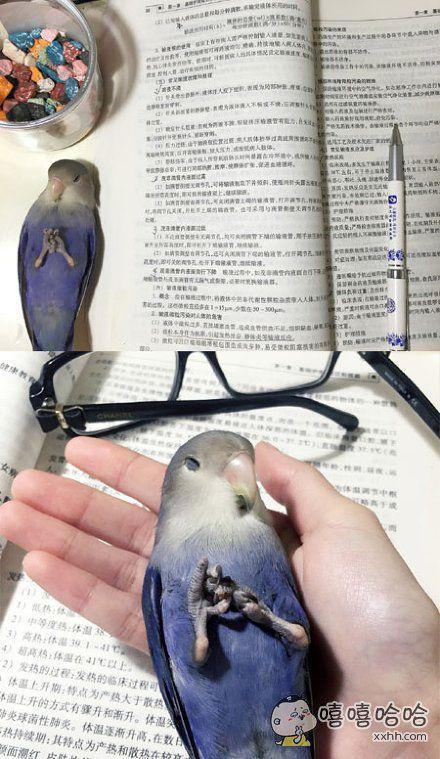 看书无聊的连鸟也睡着了~