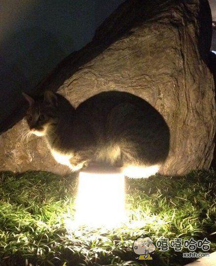 这位同学,好好擦一擦你家院子里的灯好么?都长猫了。