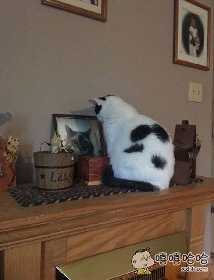 原本家里有两只关系很好的猫咪,自从其中一只猫姐姐过世之后,喵妹妹看到客厅的照片就一直守着不肯离开……把小鱼干给你,你出来好不好