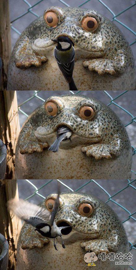 青蛙石像里面筑了鸟巢