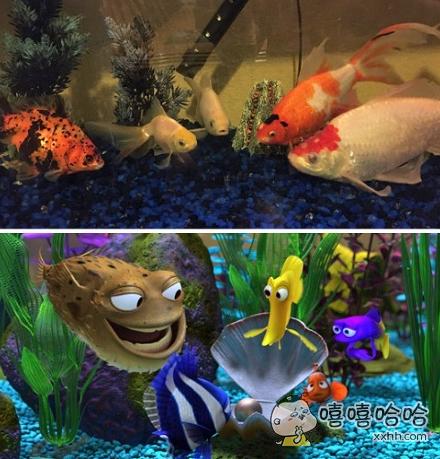大清早发现我养的鱼竟然在一起开会,我觉得它们可能在密谋着什么!
