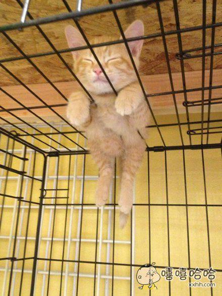 一只在笼子上睡着的喵,迷之萌感