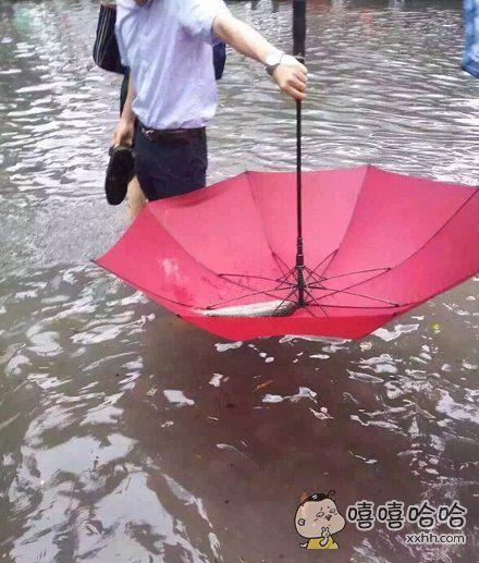 雨伞变渔网了