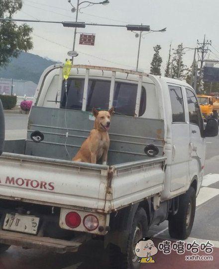 不会这么轻易的狗带!