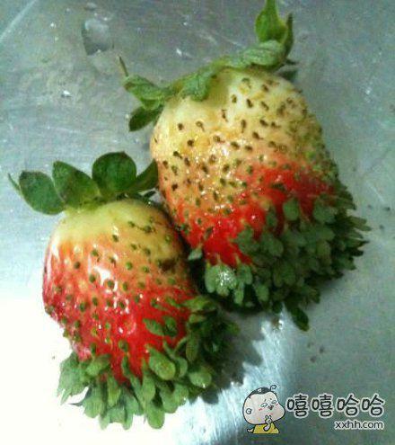 草莓你肿么了?