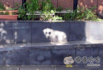 一网友在散步时发现有只小白狗正回眸看他,可走近一看……眼前的狗不是狗,你这团白是什么白