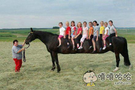世界上最长的马