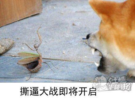 Doge大战螳螂拳