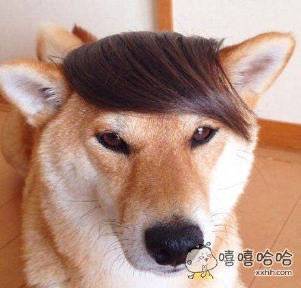 英俊帅气的刘海