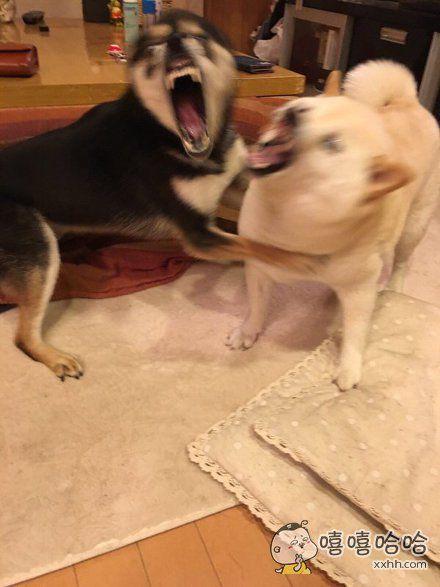 岛国一主人拍下了刚才地震瞬间家里的狗狗。。。对不起我笑了