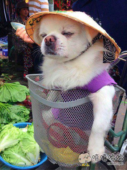 一只要跟着主银去菜市场的隐士……