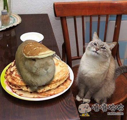 铲屎的,这就是你给我准备的猫粮?