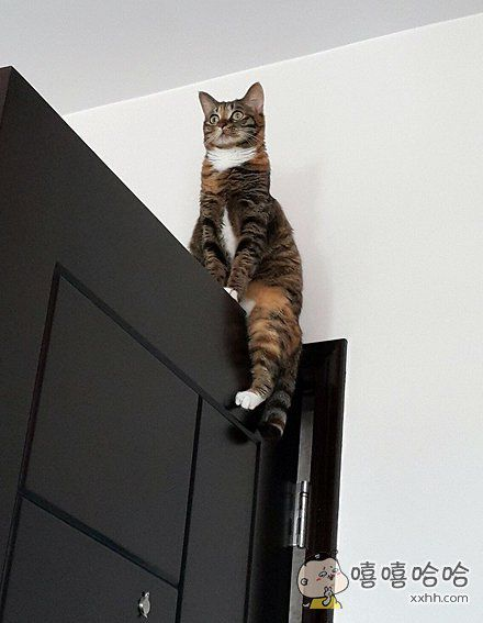 家里喵星人爬到门上面,结果下不来了,于是一脸懵逼的坐在上面。