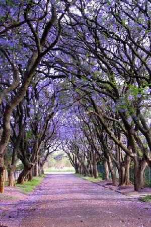 地球上最赞的16棵树 美哭了