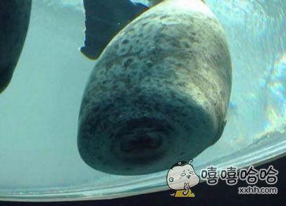 海豹一头撞在玻璃上时。。。