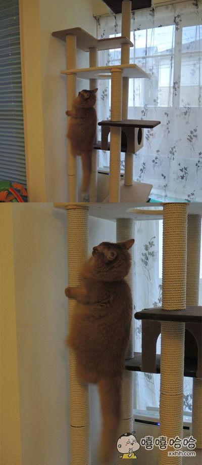 岛国一位主人表示,家里的猫咪好像进化了,以为自己是只蝉
