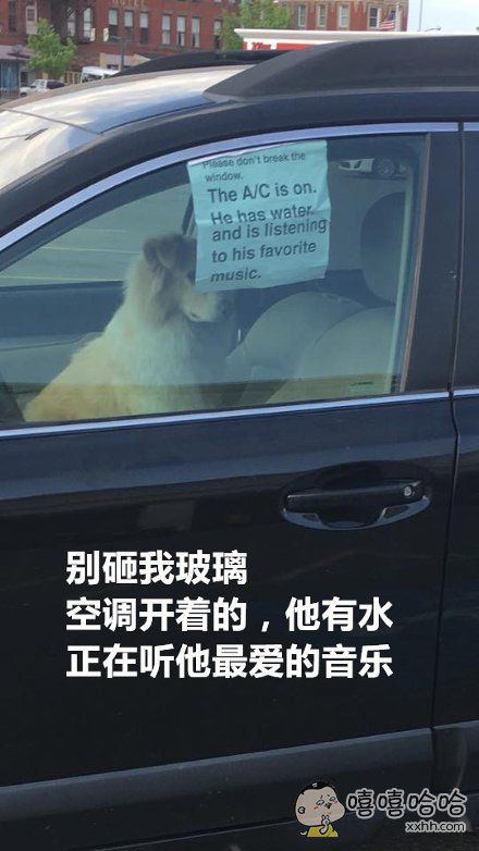 看见了这么一辆车,车里有汪,窗上还贴着张告示