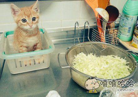 岛国一妹子去厨房帮老妈打下手,一进去发现猫咪正在乖乖的学习烹饪技巧。。。这是要去新东方吗?
