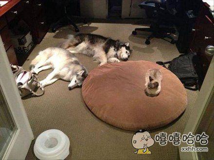 今晚你俩睡地板