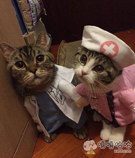 风流医生俏护士