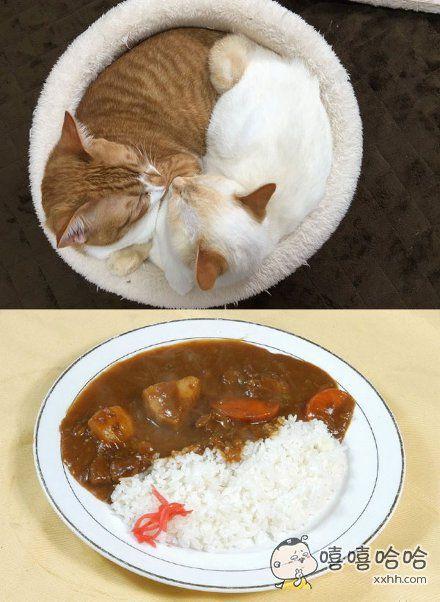 分享一碗咖喱饭