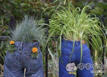 土豪家的草