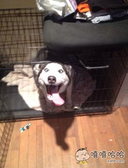 我弟弟的狗已经一年没看见他了,这是它的第一个反应。