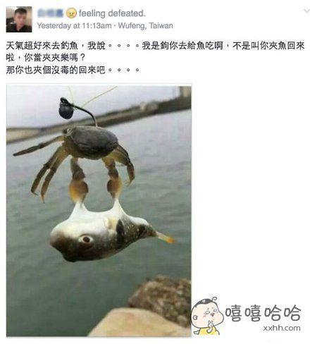 这动作。。没想到你是这么污的螃蟹!