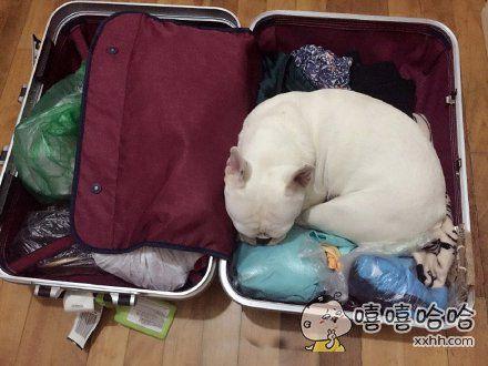 你出来,别影响我收拾行李
