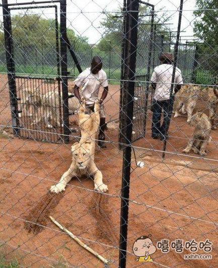 放开我,我为部落出过力,我要见狮座!!