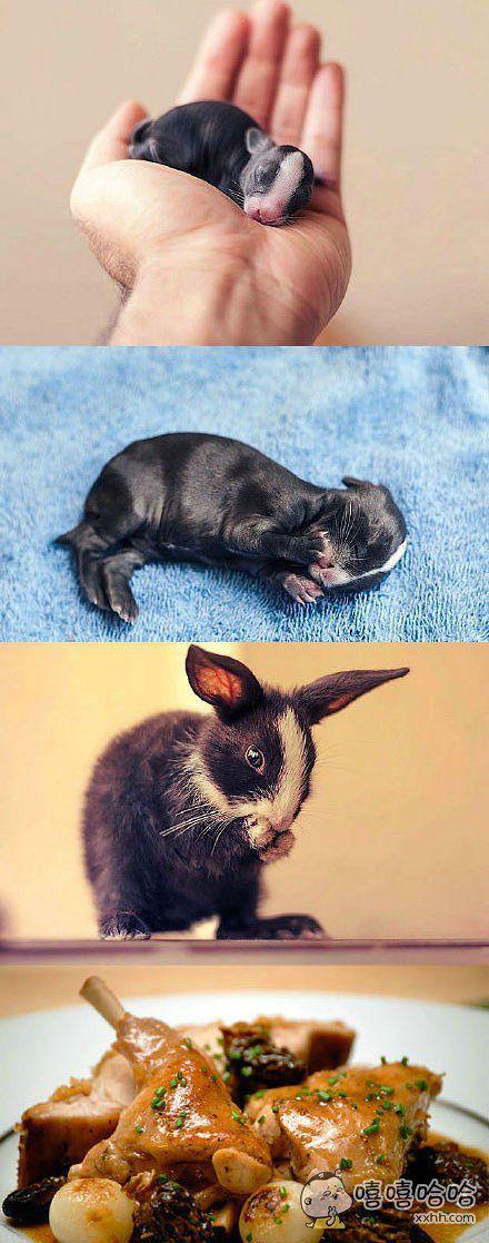小兔子的成长史
