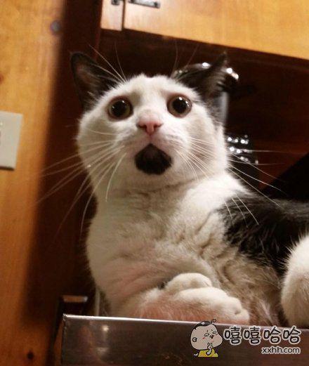 朋友家的猫,这货下巴毛色天生是黑的,每个表情都是surprised!
