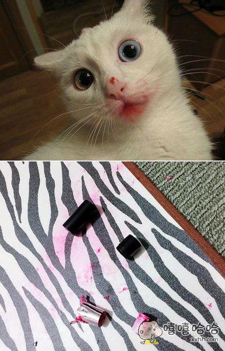 所以说家里有了宠物就要把化妆包收好,不然你们的口红可能会先动手打人