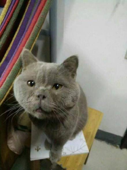 原来猫也是分美丑的