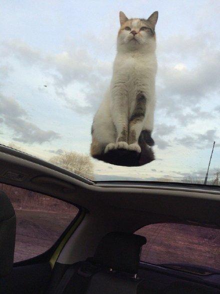猫大仙,你咋说上天就上天了呢!