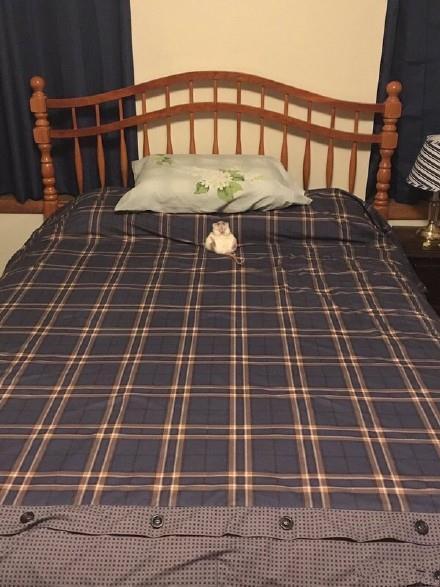 我叫皇鼠·冰泪·安塔利亚·K·殇梦薰,每天从200平米大的床上醒来。