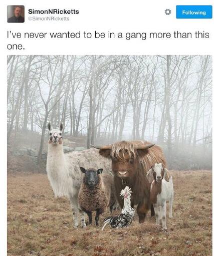 有个网友在野外看到一队奇怪的动物组合。。。有点想要加入它们喔